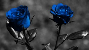 Blue-Rose-Wallpaper-1080x607