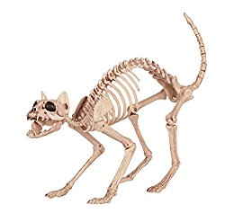 skeletoncat