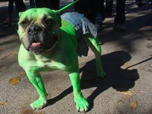 hulkdog